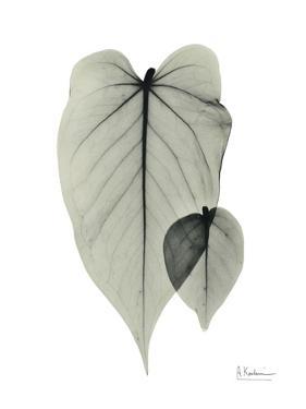 Philodendron Portrait by Albert Koetsier