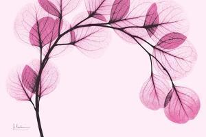 Pink Eucalyptus by Albert Koetsier
