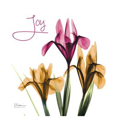 Pink Iris Joy by Albert Koetsier