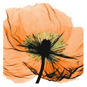 Poppy Orange by Albert Koetsier