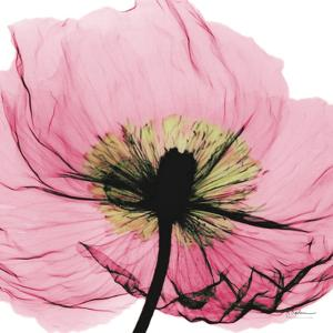 Poppy Pink by Albert Koetsier