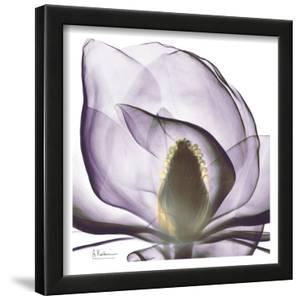 Precious Orchid in Purple Close by Albert Koetsier