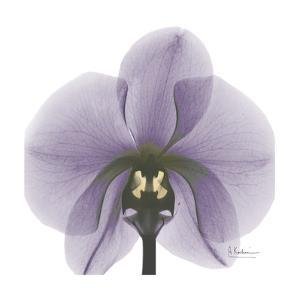 Precious Orchid in Purple by Albert Koetsier