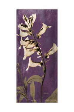 Purple Opus Foxglove by Albert Koetsier