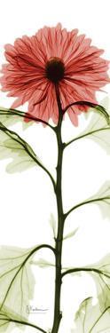 Red Chrysanthemum by Albert Koetsier