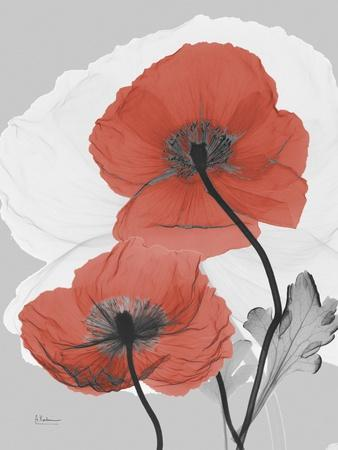 Red Moment Poppy