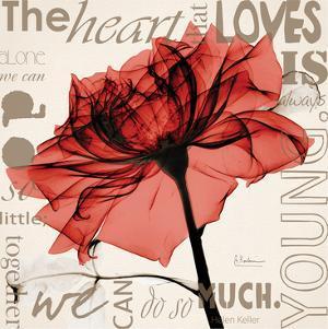 Red Rose Love by Albert Koetsier