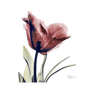 Red Tulip by Albert Koetsier