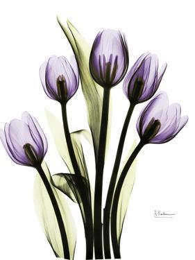 Regal Tulip B13 by Albert Koetsier