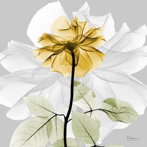 Rose in Gold 2 by Albert Koetsier