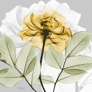 Rose in Gold 3 by Albert Koetsier