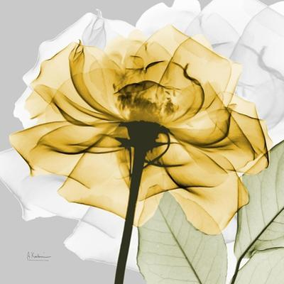 Rose in Gold 4 by Albert Koetsier