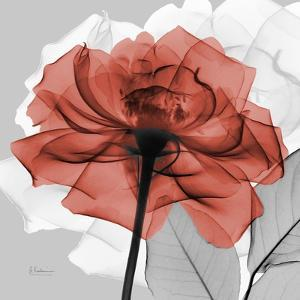 Rose on Gray 1 by Albert Koetsier