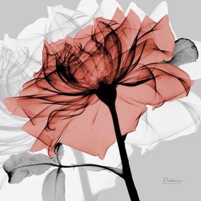 Rose on Gray 2