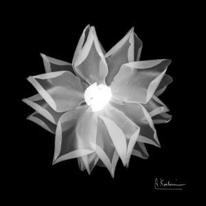 Rose Petals 1 by Albert Koetsier