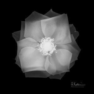 Rose Petals 2 by Albert Koetsier