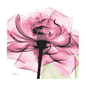 Rose Pink by Albert Koetsier