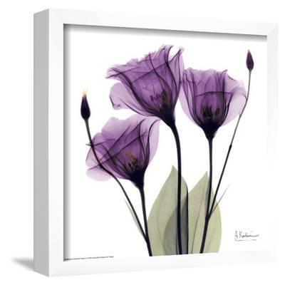 Royal Purple Gentian Trio by Albert Koetsier