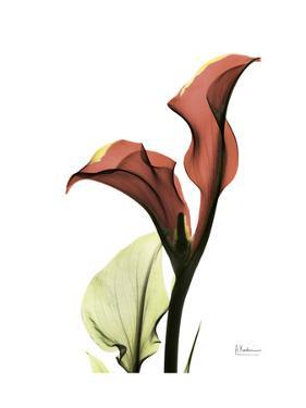 Ruby Calla Lily by Albert Koetsier