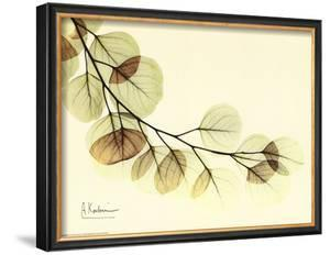 Sage Eucalyptus Leaves II by Albert Koetsier