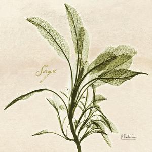 Sage in Bloom by Albert Koetsier