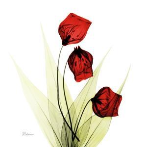 Sandersonia in Red by Albert Koetsier