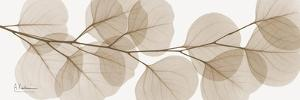 Sepia Kaluptos eucalyptus by Albert Koetsier