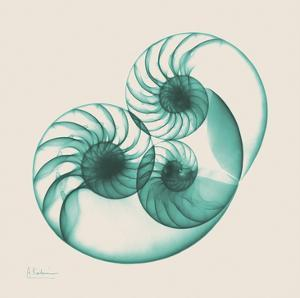 Sepia Nautilus 2 by Albert Koetsier
