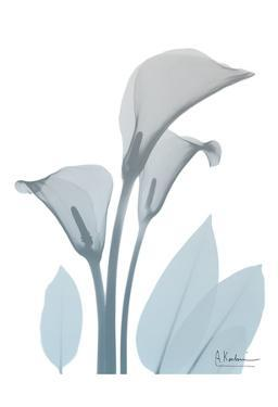 Serene Calla Lily by Albert Koetsier