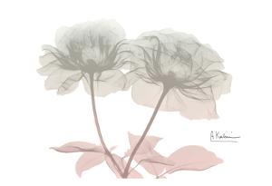 Serenity Double Rose by Albert Koetsier