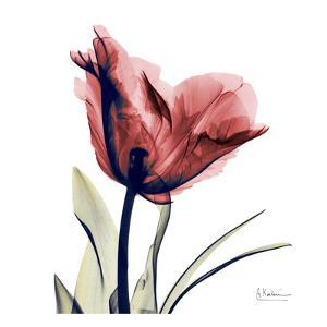 Single Tulip in Red by Albert Koetsier