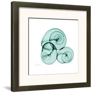 Snails by Albert Koetsier