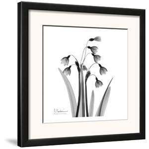 Snowdrop Black and White by Albert Koetsier