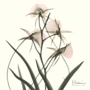 Soft Pink Orchids by Albert Koetsier