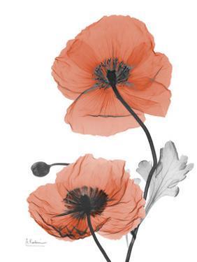 Soft Poppy by Albert Koetsier