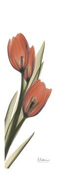Soft Tulip by Albert Koetsier