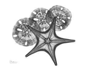 Starfish and Sand Dollar by Albert Koetsier