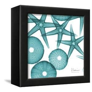Starfish Trip 3 by Albert Koetsier