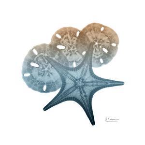 Steel Hues Starfish and Sand Dollar by Albert Koetsier