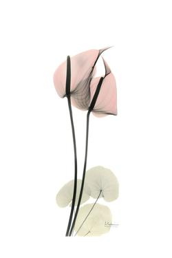 Subtle Anthurium by Albert Koetsier