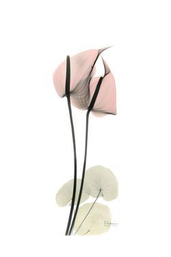 Subtle Anthurium by Albert Koetsier