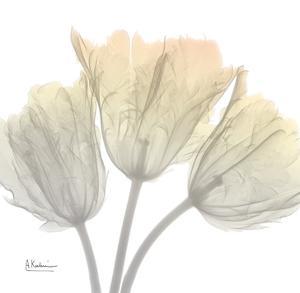 Sunday Morning Tulips by Albert Koetsier