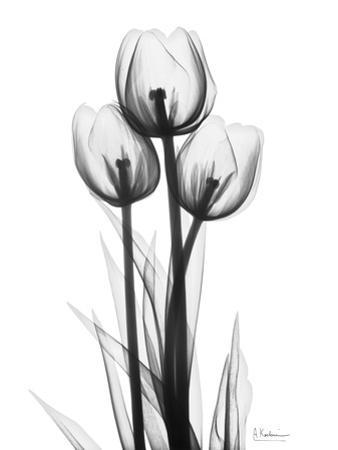 Sweet Tulips in Black and White by Albert Koetsier