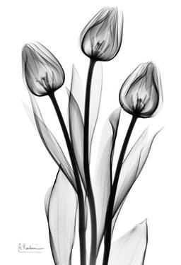 Tall Early Tulips N Black and White by Albert Koetsier