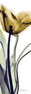 Tall Orange Tulip by Albert Koetsier