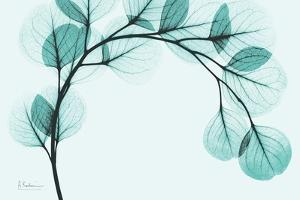 Teal Eucalyptus by Albert Koetsier