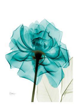 Teal Spirit Rose by Albert Koetsier