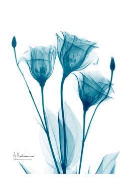 Three Gentian in Blue by Albert Koetsier