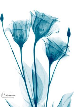 Three Gentian in Blue