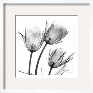 Three Tulips in Black and White by Albert Koetsier